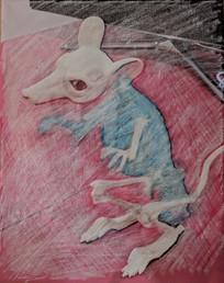 Pale Mouse