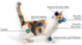 catLaser.jpg