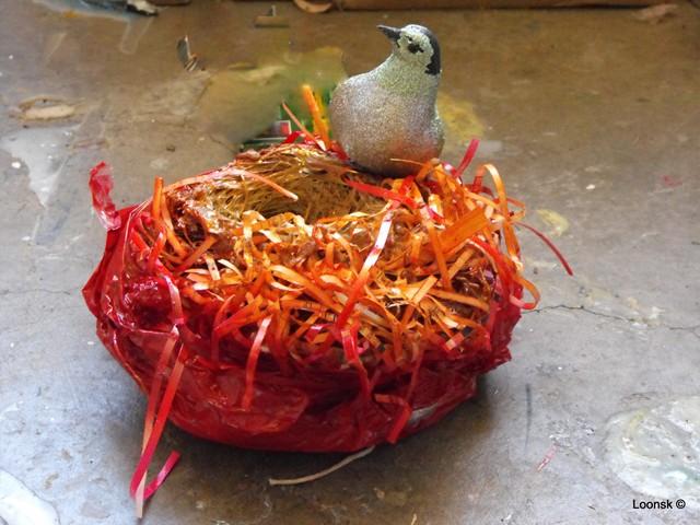 Dove in Red Nest