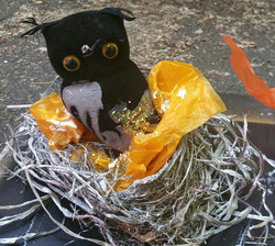 Owl in Nest