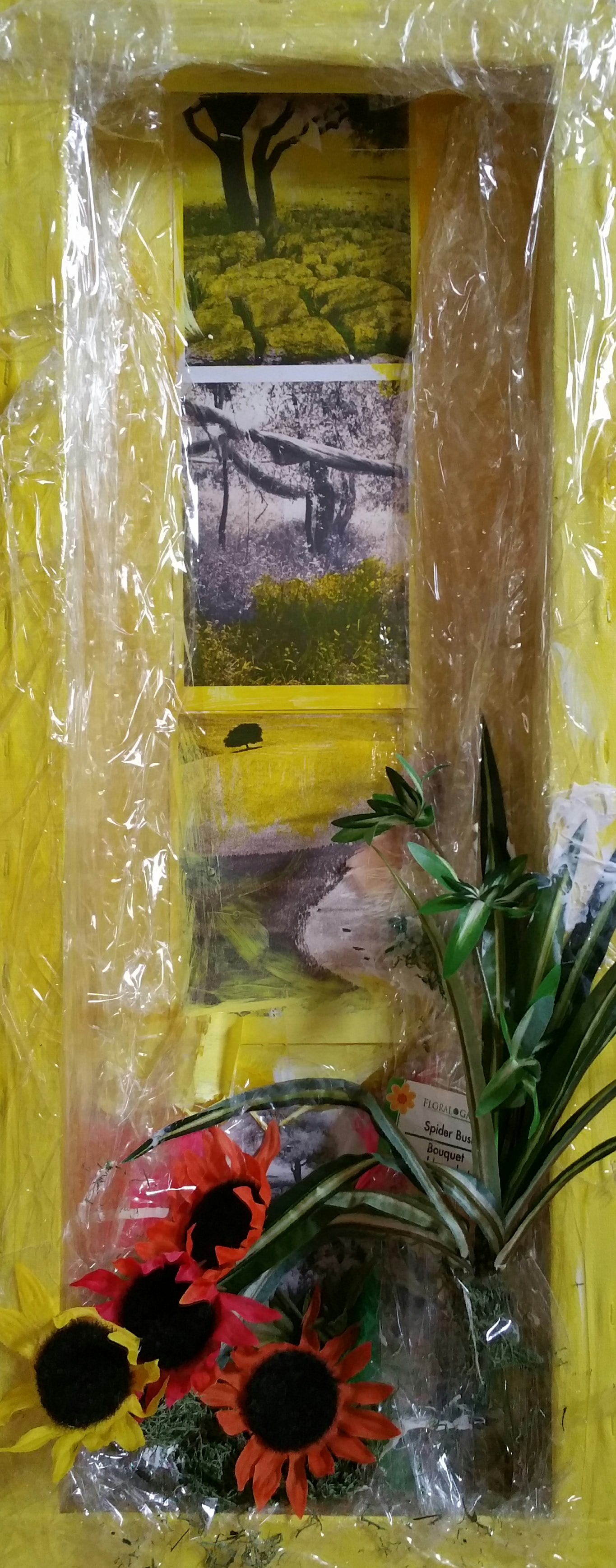 Yellow Daisy Desert 1