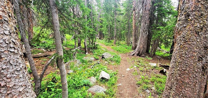 Snowy Range Green Rock Trail.jpg