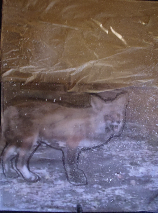 Fox Cam 2