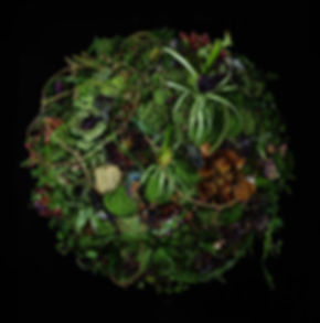 CH - Planet Plant.jpg