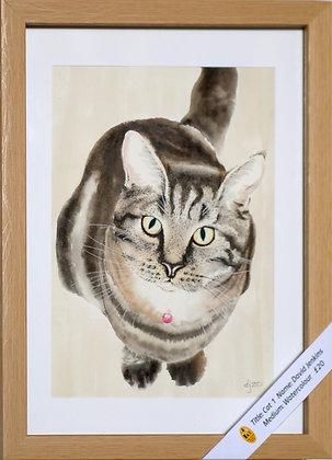 'Cat 1'