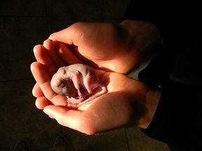 baby squirrel in hands.JPG