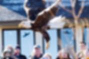 Eagle release John Watson.jpg