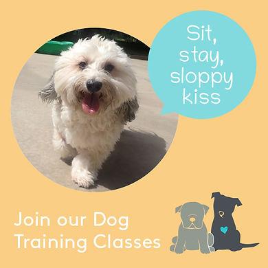 Puppy_Classes_website.jpg