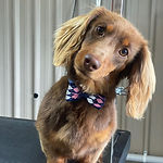 Dog_small_short.jpg