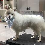 Dog_Large_long hair.jpg