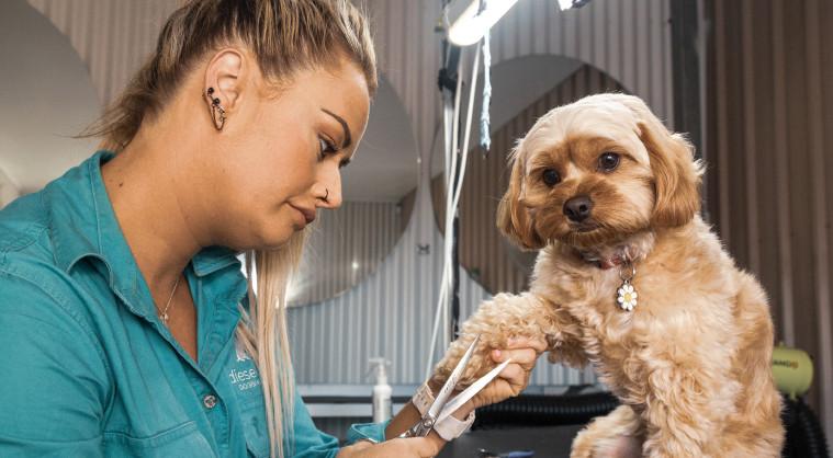 Dog Groom at Diesel & Blue Doggie Daycare