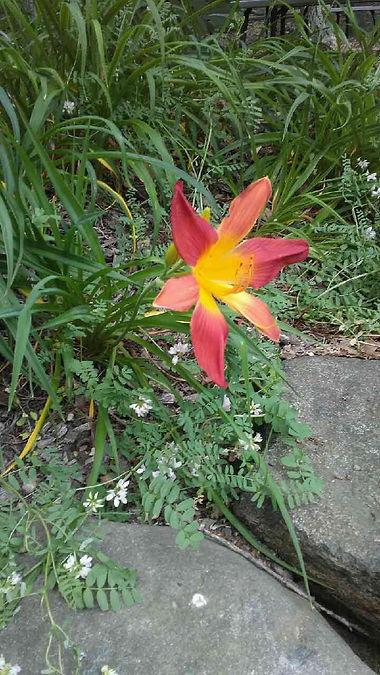 USSC Flowers 20.jpg