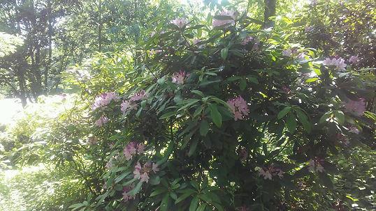 USSC Flowers 6.jpg
