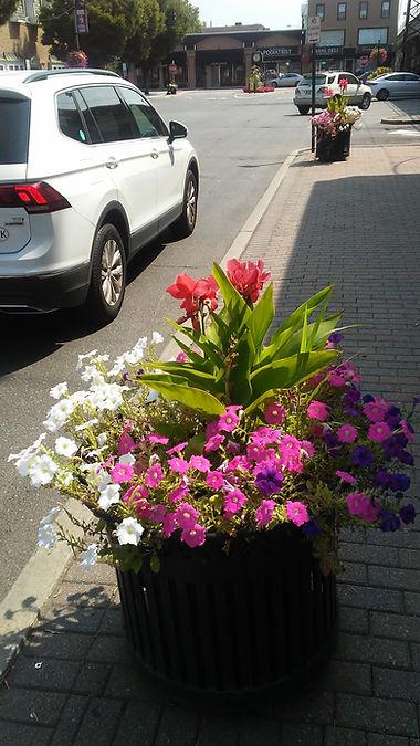Rockville Center Flowers 4.jpg