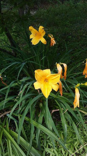 USSC Flowers 19.jpg