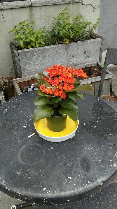 Orange Flowers on Table.jpg