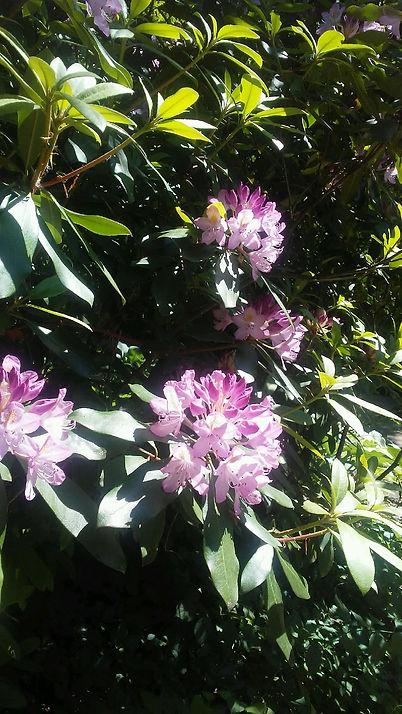 USSC Flowers 8.jpg