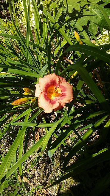 USSC Flowers 24.jpg