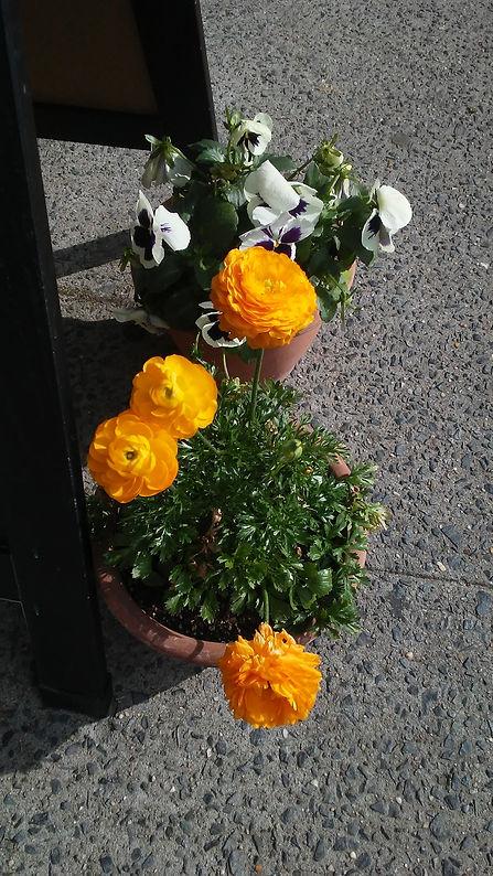 Marigolds & Flowers.jpg
