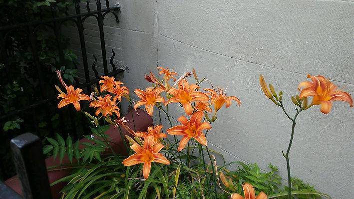 Orange Flowers Wall.jpg
