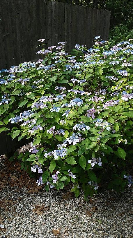 USSC Flowers 15.jpg