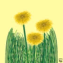 75. Dandelions.jpg