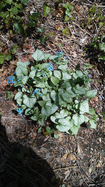 Tiny Blue Flowers.jpg