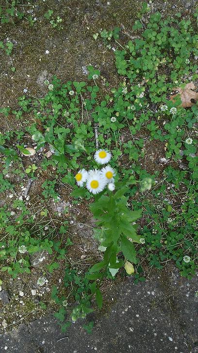 USSC Flowers 10.jpg