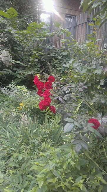 Hidden Roses.jpg