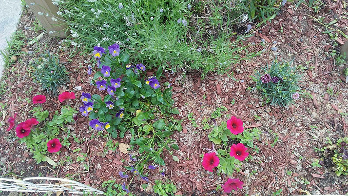 Flowers and Plants in Wood Chips 4.jpg
