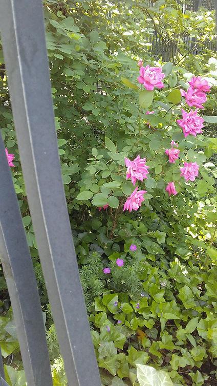 Hidden Flowers Gate.jpg