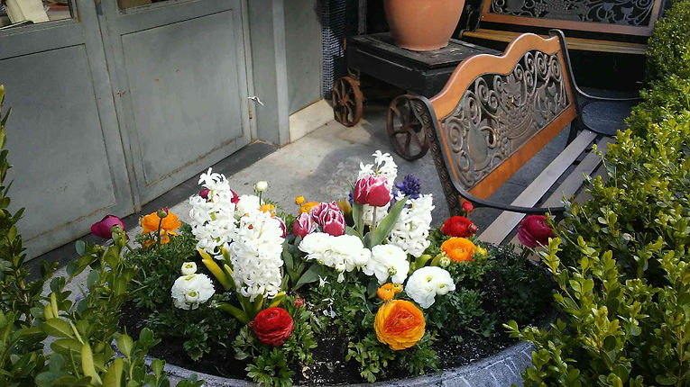 Bench and Flowers.jpg