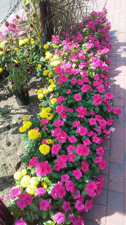 Rockville Center Flowers 7.jpg