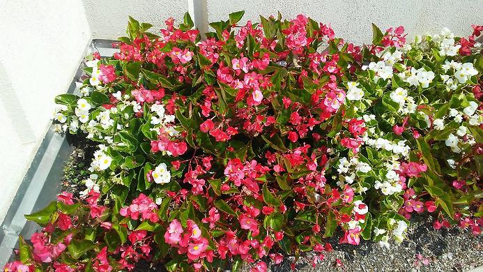 Bright Ground Flowers.jpg