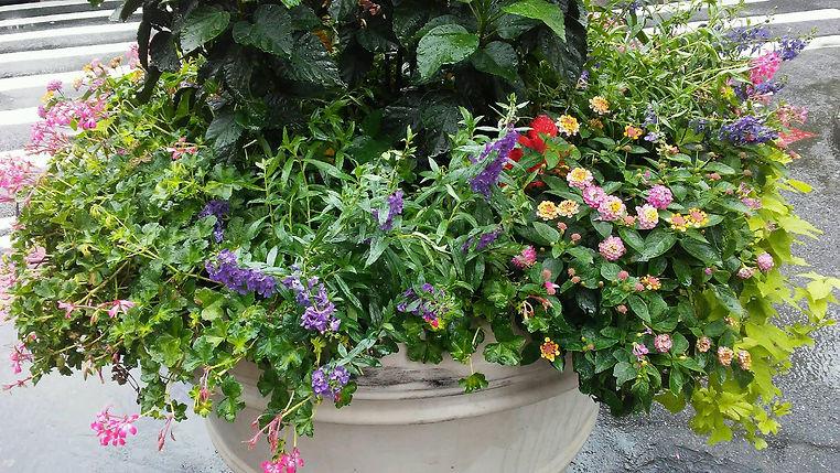 Various Flowers.jpg