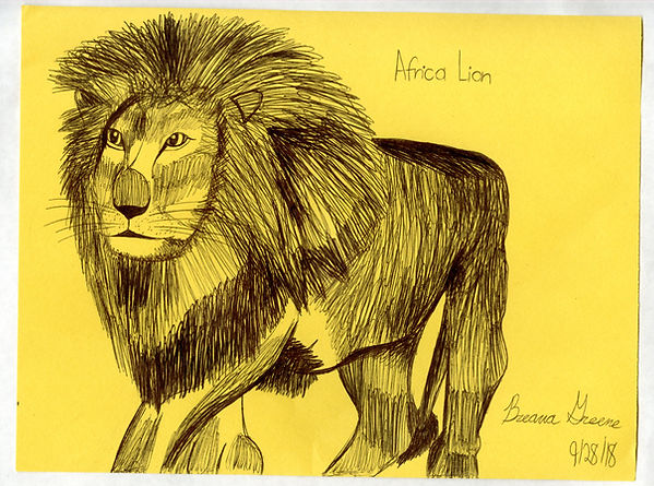 Africa Lion.jpg