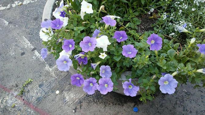 Union Sq. Pot Flowers 3.jpg