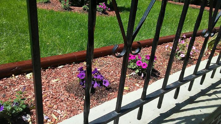 Gated Line of Petunias.jpg