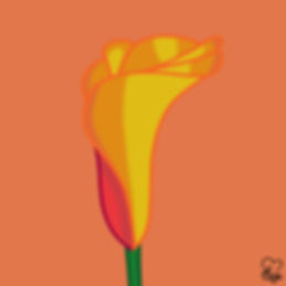 Yellow Orange Calla.jpg