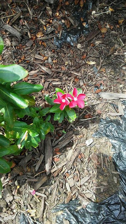 Bright Baby Flowers.jpg