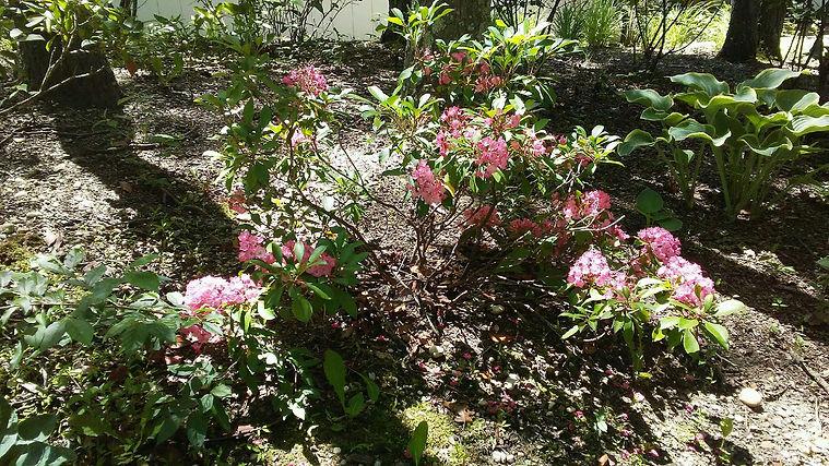 USSC Flowers.jpg
