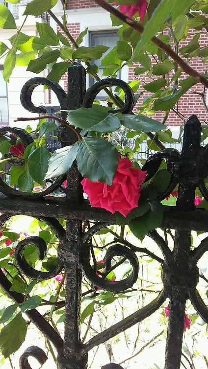 Hiding Rose Gate.jpg