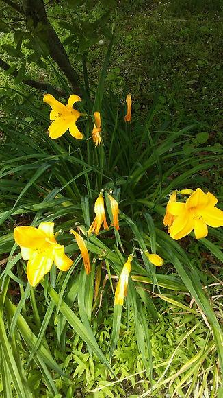USSC Flowers 18.jpg