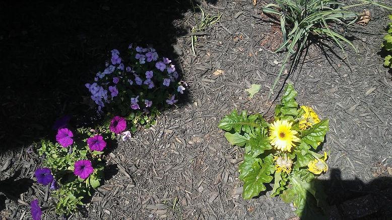 Mama Love's Outside Flowers.jpg