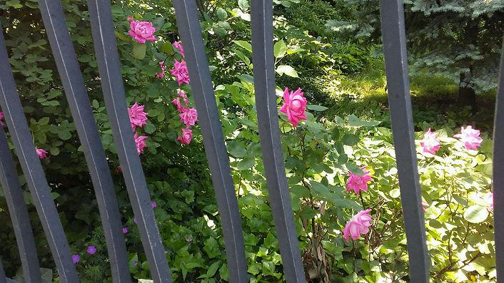 Shade to Light Hidden Flowers Gate.jpg