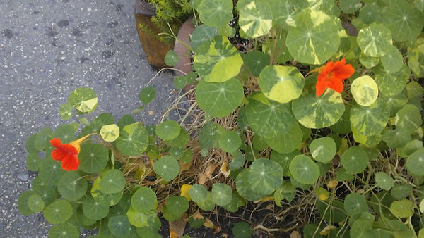 Small Orange Flowers.jpg