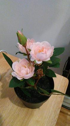 Artificial Pink Roses Pot.jpg