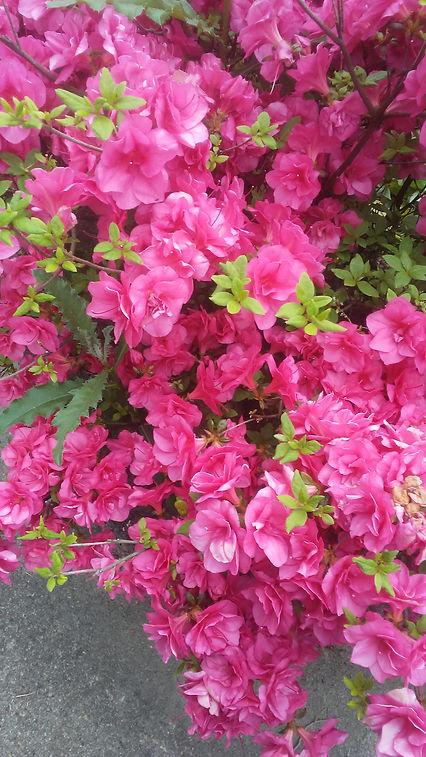 Grandma's Pink Flowers 2.jpg