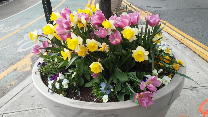 Mixture Pot Flowers.jpg