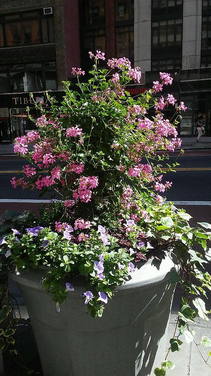 Pink Purple Flowers Pot.jpg